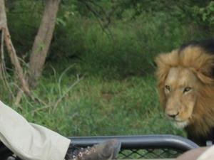 The Kruger National Park Explorer 3 or more days Fotos