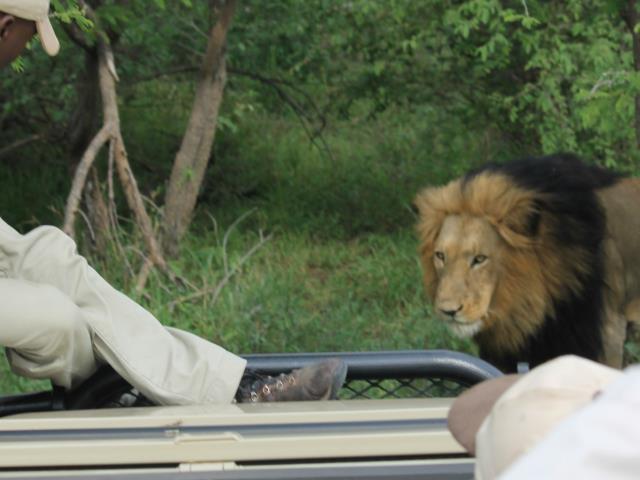 The Kruger National Park Explorer 3 or more days Photos