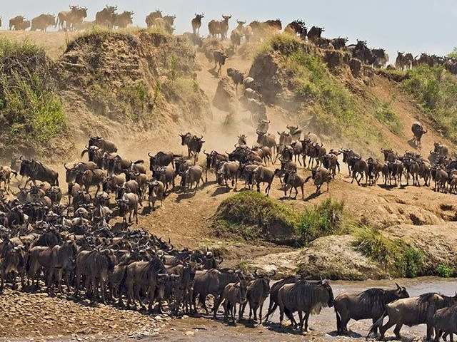 5days Serengeti Safari Tanzania Photos