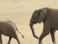 8 Days - Masai Mara Classic Safari