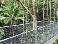 Canopy Bridge At Taman Negara Side View