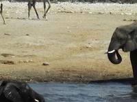Epic Swakopmund & Etosha National Park Tour