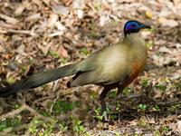 Madagascar Wildlife and Birdwatching