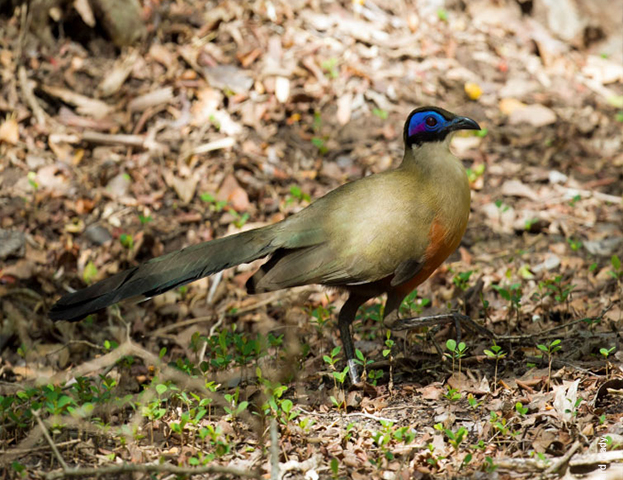Madagascar Wildlife and Birdwatching Photos