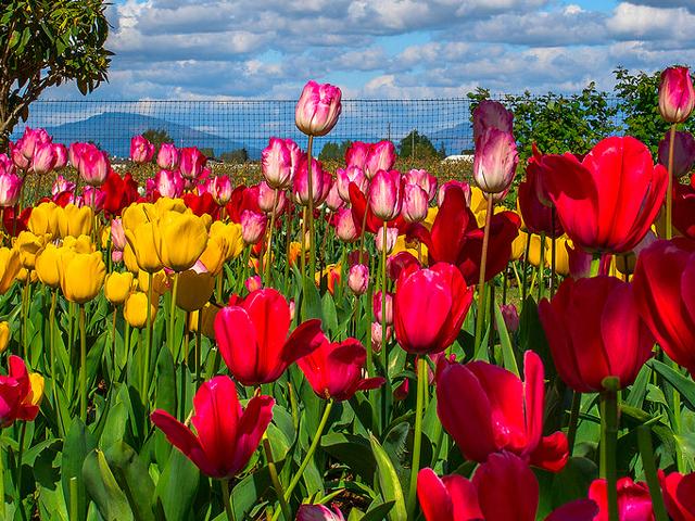 Kashmir Spring Season Holiday Photos