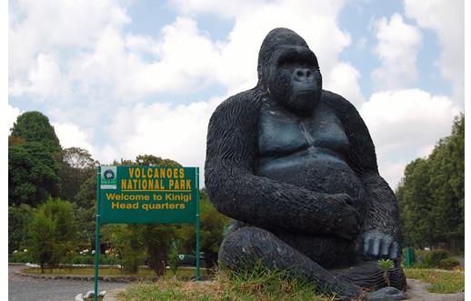 Rwanda Mountain Gorilla Tour Experience Photos