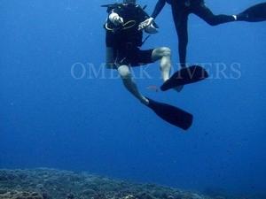 Fun Dive Photos
