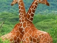 Safari in National Parks: Arusha and Ngorongoro Crater