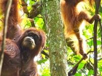 Bukit Lawang Jungle Trekking