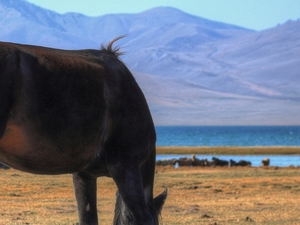 The Way of Nomad - Horseback Riding Tour Photos