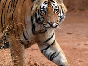 Bandhavgarh Tiger Reserve Fotos