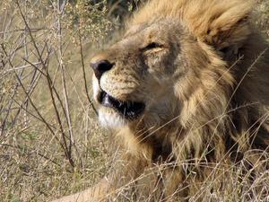 7 Days Overnight Safari in Central Kalahari Game Reserve, Botswana Fotos