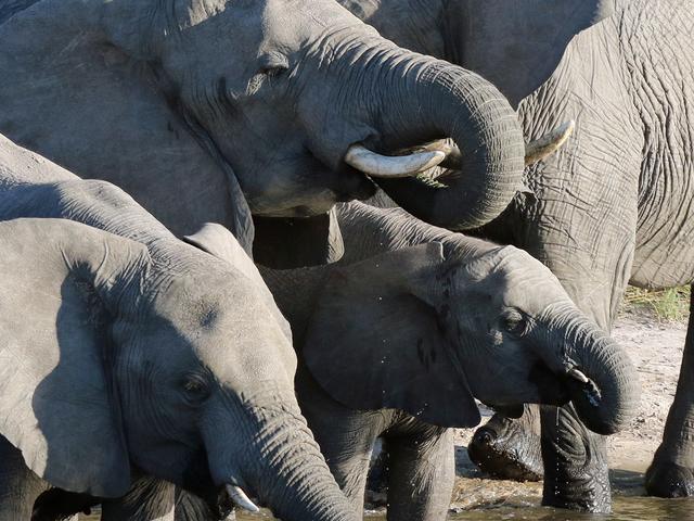 5 Days Okavango Delta Adventure Safari in Botswana Photos