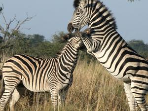 9 Days Makgadikgadi Adventure - Okavango Delta, Moremi, Savuti, Chobe Fotos