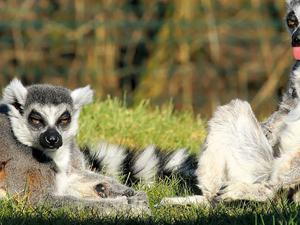 Classic Sights of Madagascar Fotos