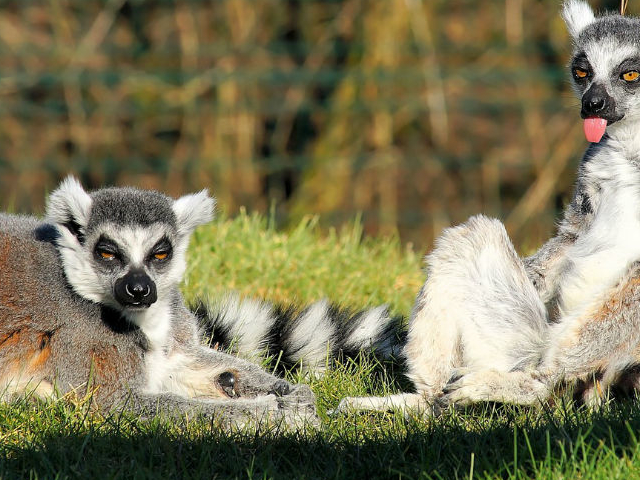 Classic Sights of Madagascar Photos