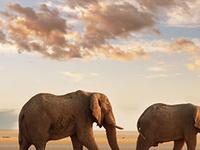Across Kenya - A Livetime Experience