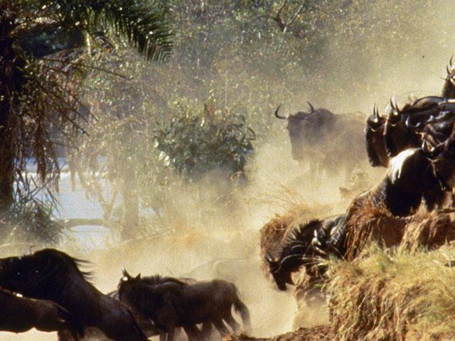 North Tanzania - Serengeti, Ngorongoro and Lake Manyara Game Drive Safari Photos