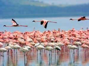 Maasai Mara and Lake Nakuru Photos