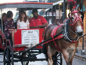 Save $$ on Carriage Tours Fotos