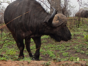 Living with Orphaned Rhinos Volunteering Photos