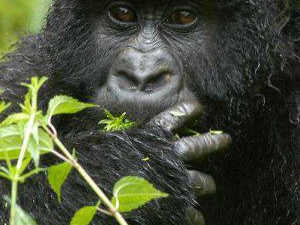 Rwanda, Congo and Uganda Tour Photos