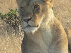 3 Day Masai Mara Bush Safari Fotos