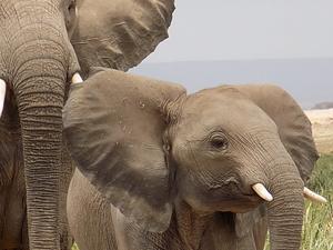 6 Day Safari to Kenya's Premium Parks Fotos