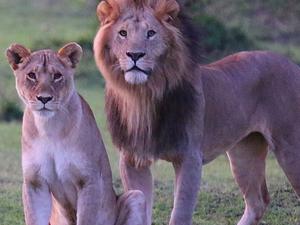 8 Days Safari to Kenya Premium Parks Fotos