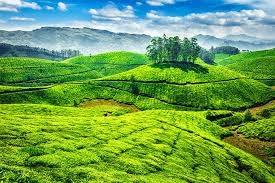 The Haven Of Kerala Photos