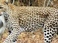 Kruger Safari in South Africa