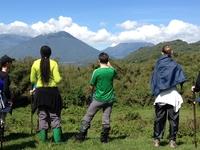 Trekking Majestic Mountain Gorilla in Rwanda