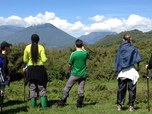 Trekking Majestic Mountain Gorilla in Rwanda Photos