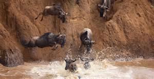 Masai Mara - Lake Nakuru - Amboseli Tour Fotos