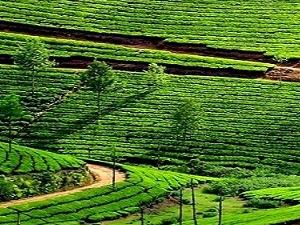 Kerala Tour Package Fotos