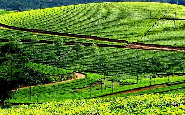 Kerala Tour Package Photos