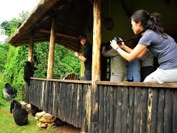 Gorilla and Rwenzori Trekking Photos