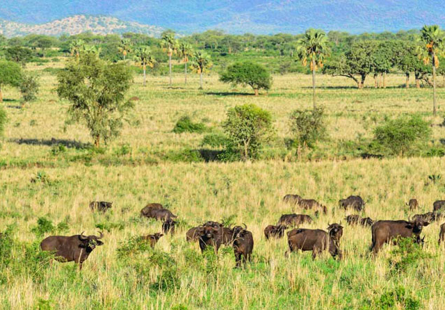 4 Days Wildlife Experience In Kidepo Valley National Park Photos