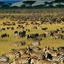 Great Migration Kubw Five Safaris