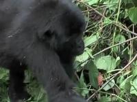 Rectangle Safaris: Mgahinga Gorilla Tour