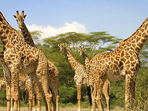 Decagon Safaris: Best of Kenya Fotos