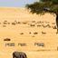 Kenya Maasai Mara