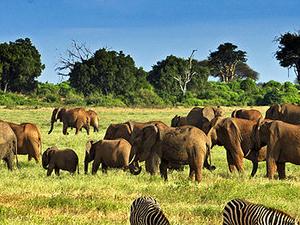 Decagon Safari: Wonders of Kenya Safari Fotos