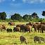 Kenya Tsavo National Park