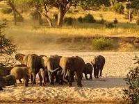 Tarangire National Park Kubwa Five Safaris