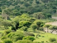 Tarangire Safari Lodge In Tangira National Park Kubwa Five Safaris