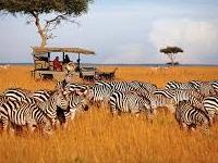 Wow Kubwa Five Safaris