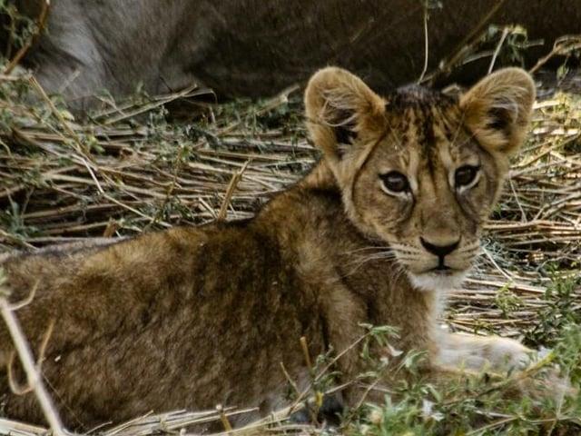 Tour of Victoria Falls and Chobe National Park Photos