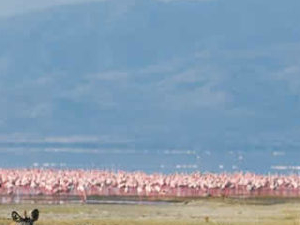 Lake Manyara National Park Day Tour Photos