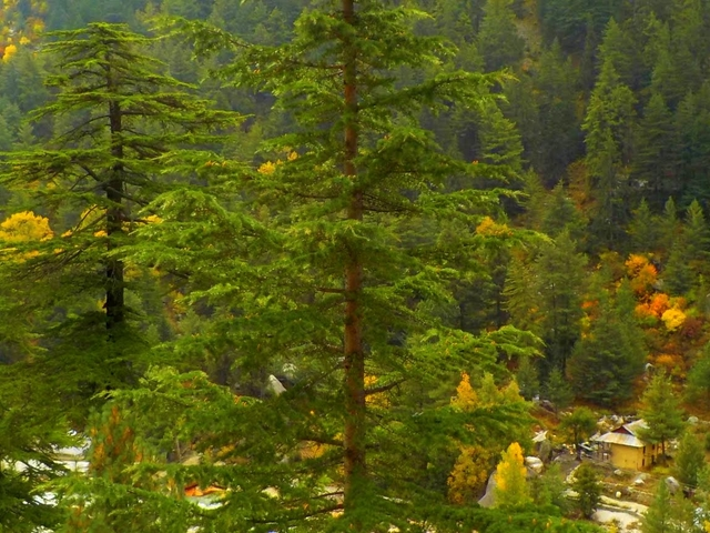 Feel the Himalayas in Mussoorie and Dhanaulti Photos
